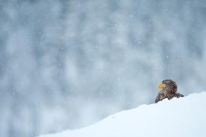 winter snow bird