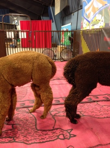 """In case you want to play """"guess the animal at the State Fair."""""""