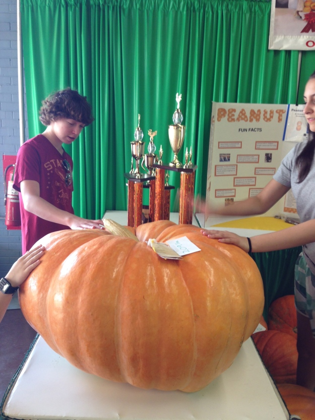 The winning pumpkin at the OK State Fair. 209 lbs.
